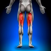 20869805 hamstrings anatomy muscles