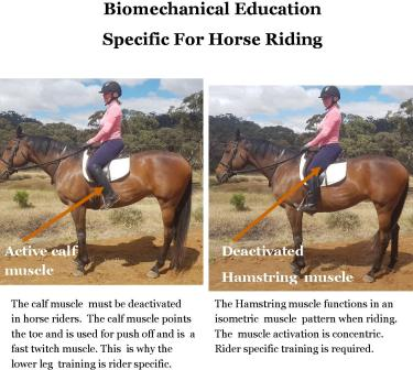 Biomechanical Education For Horse riders web