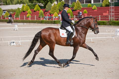 rider competing dressage competition classic estepona malaga province andalusia spain 34936377